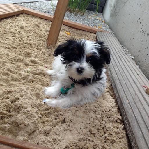 Sand- und Buddelkasten für Kinder oder Hunde