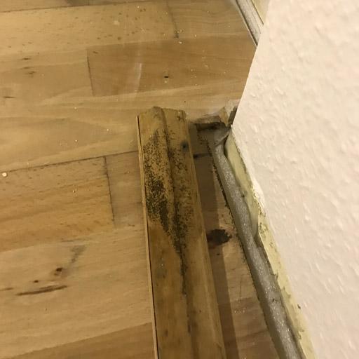 Schwarzer Schimmel durch Feuchtigkeit unter dem Parkett im Keller nach Verlegen